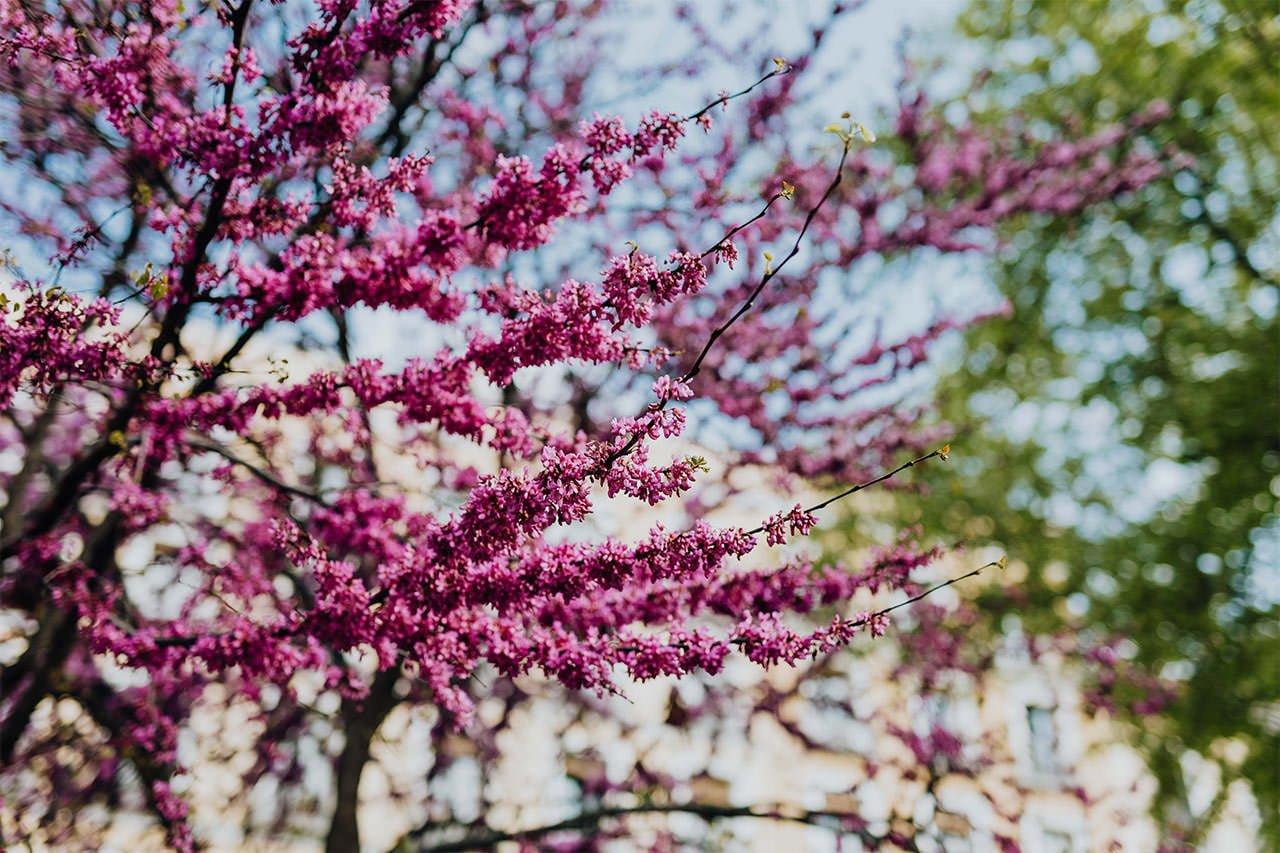 Frühlingsblumen symbolisieren die Ankunft einer neuen Zeit